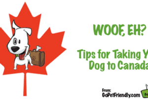 Tips for Taking your Dog to Canada from GoPetFriendly.com