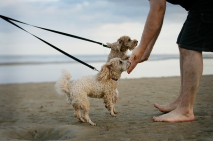 Man greeting two strange dogs for the first time on a beach