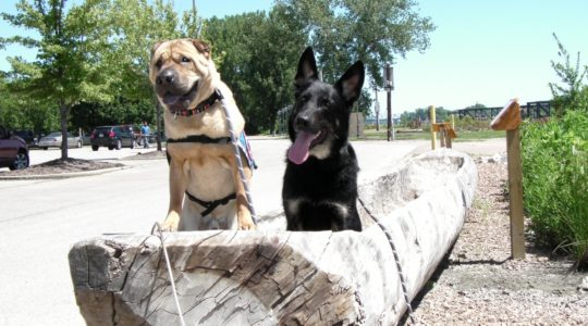 Ty and Buster in dugout canoe - St. Charles, MO