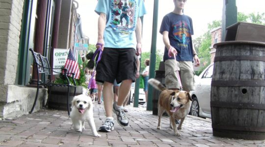 People walking dogs - St. Charles, MO