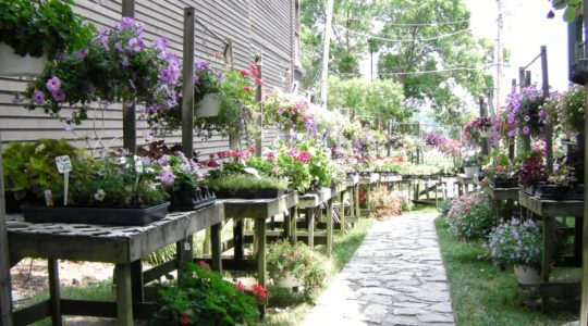 Flower store - St. Charles, MO