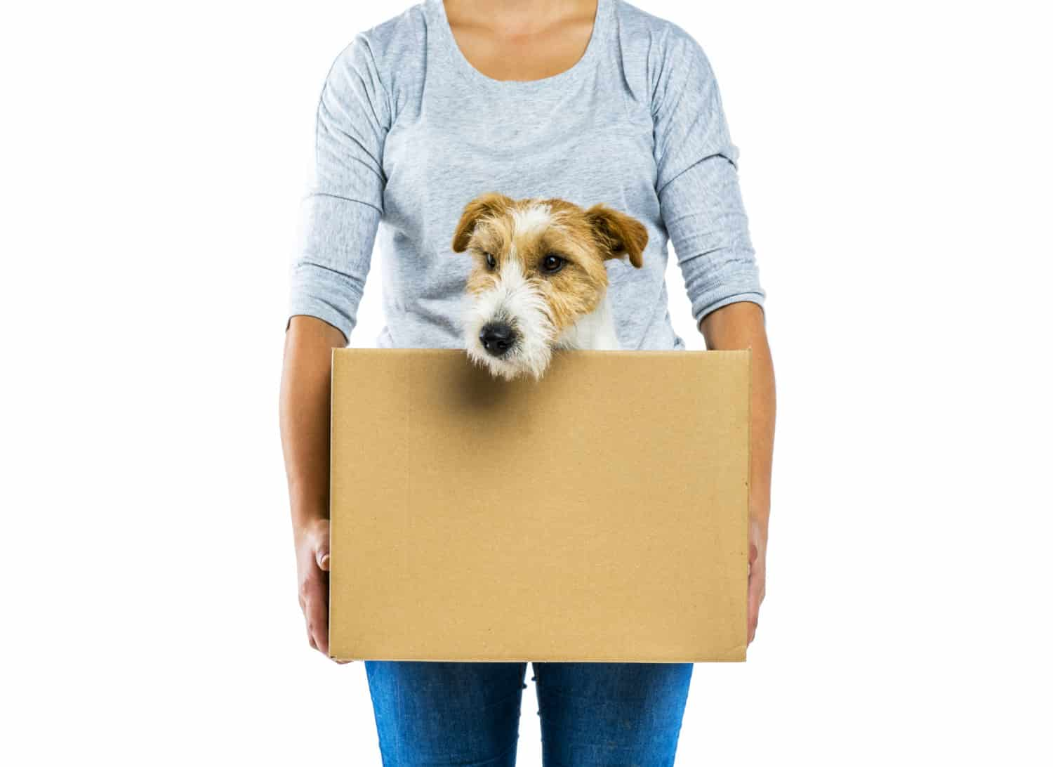Woman holding a box with a cute terrier dog in it