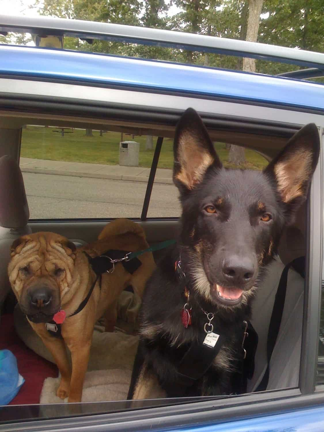 Ty and Buster in the Car