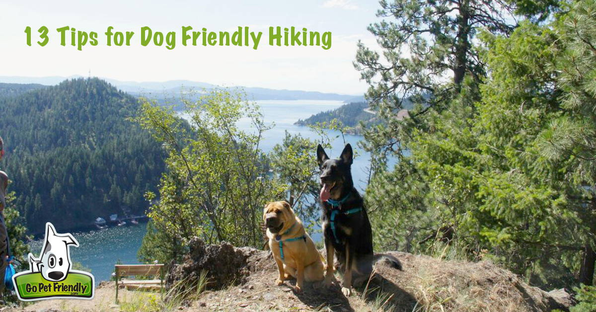 13 tips for dog friendly hiking from GoPetFriendly.com