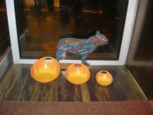 Ink48 Entrance - Water bowls for arriving pets