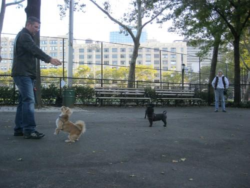 DeWitt Dog Park - New York