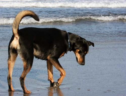 Rusty on the Beach