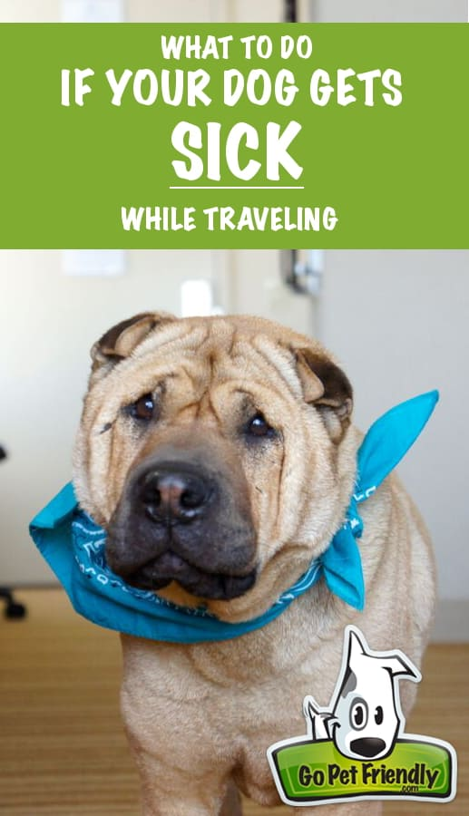What To Do If Your Pet Gets Sick While Traveling