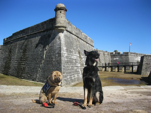 Ty and Buster at the Fort in St. Augustine