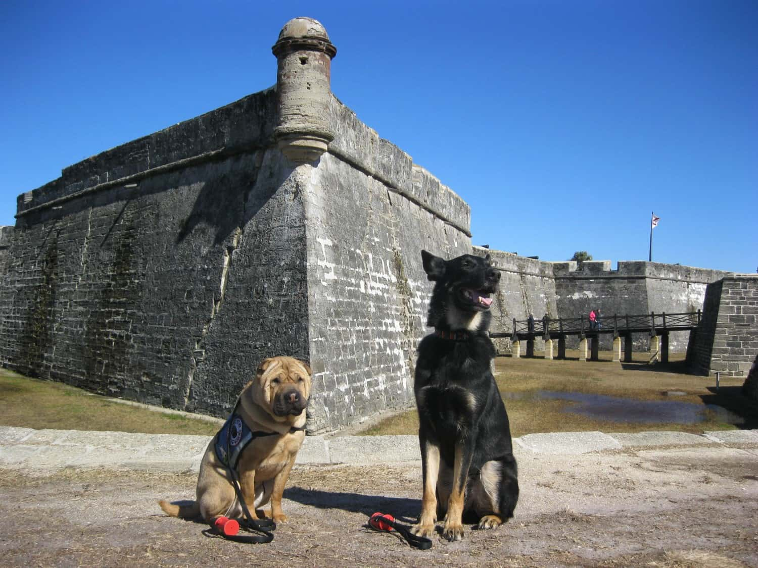 A Pet Friendly Stroll in Saint Augustine