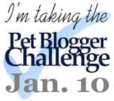 Pet Blogger Challenge Jan. 10