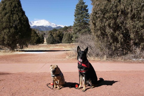 Ty and Buster with Pikes Peak