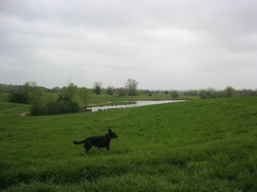 Buster at Shelby Farms Off-leash Area