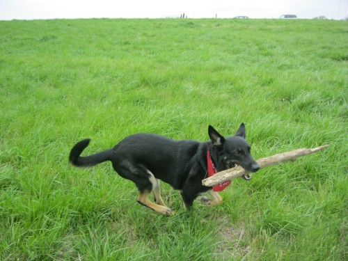 Buster and the stick