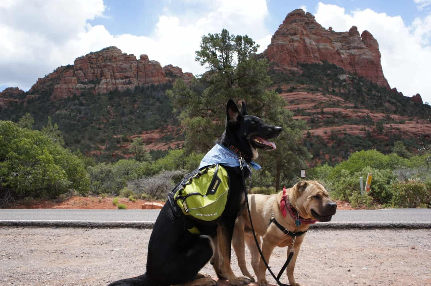 Buster and Ty Ready for a Hike - Sedona, AZ
