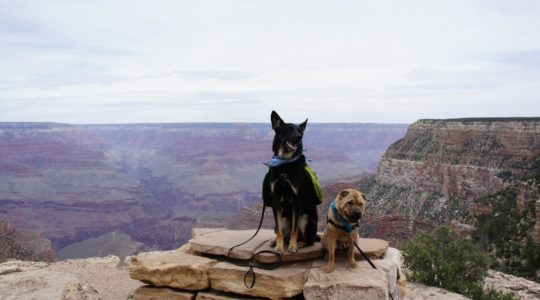 Buster and Ty at the Grand Canyon