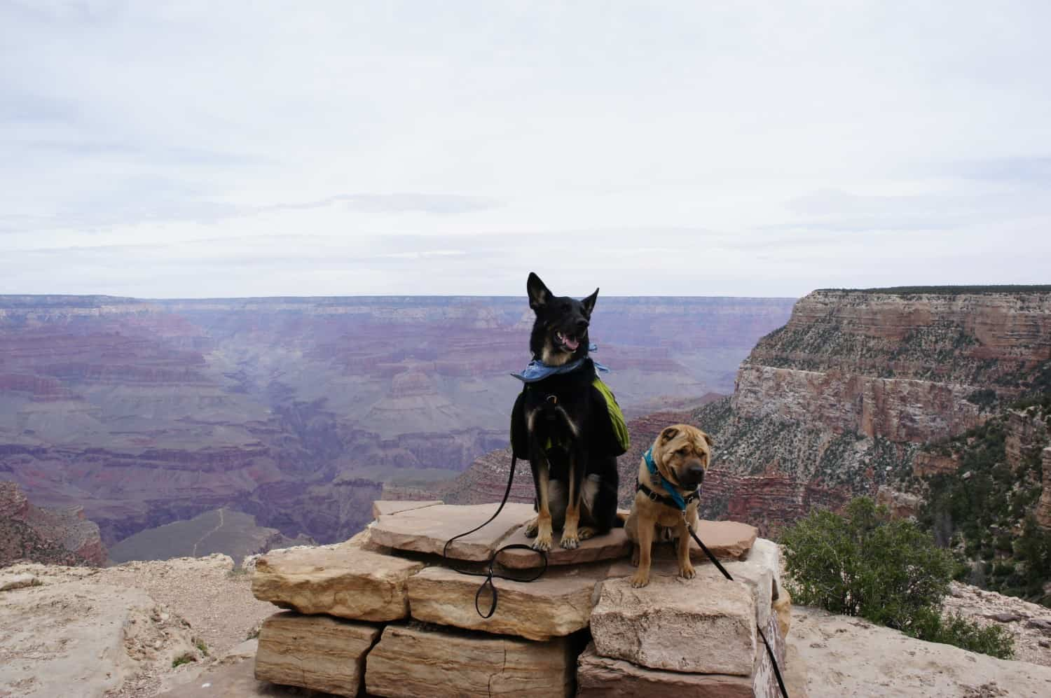 Dogs Dig the Grand Canyon