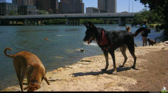 Buster at Austin's Dog Beach