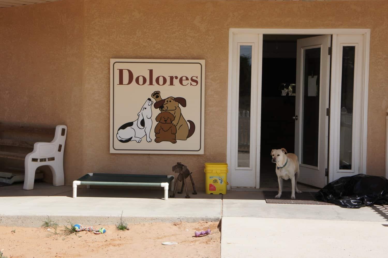 Best Friends - Dog Town
