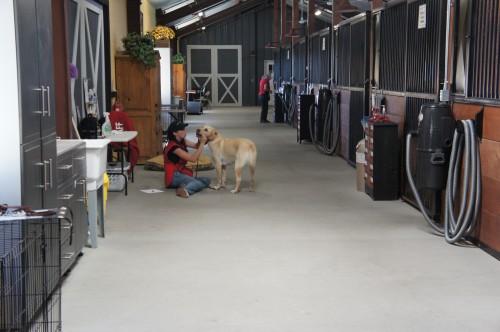 Dairydell Canine - Petaluma, CA