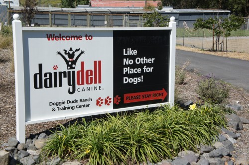 Dairydell Canine Sign