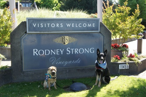Ty and Buster at Rodney Strong