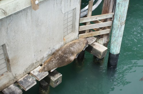 Sea lion takes a nap