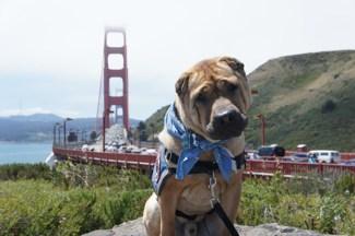 Ty at Golden Gate Bridge, San Francisco