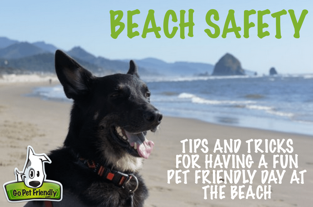 Beach Safety - Tips and Tricks for Having a Fun, Pet Friendly Day at the Beach
