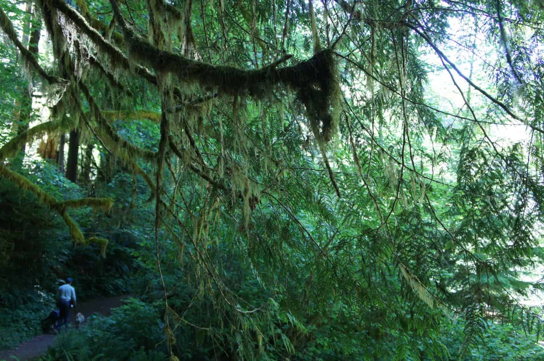 Sweet Creek Trail - Florence, Oregon