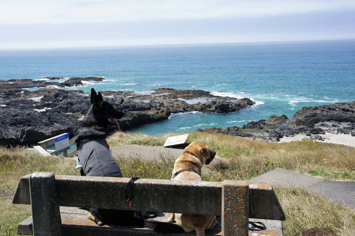 Buster and Ty at Cape Perpetula, Oregon