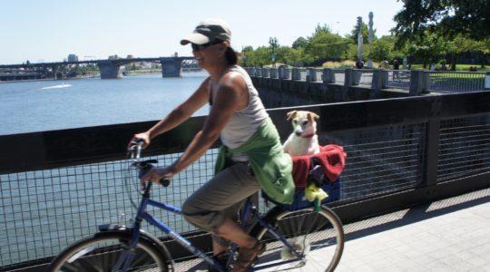Dog on Bike - Portland, Oregon