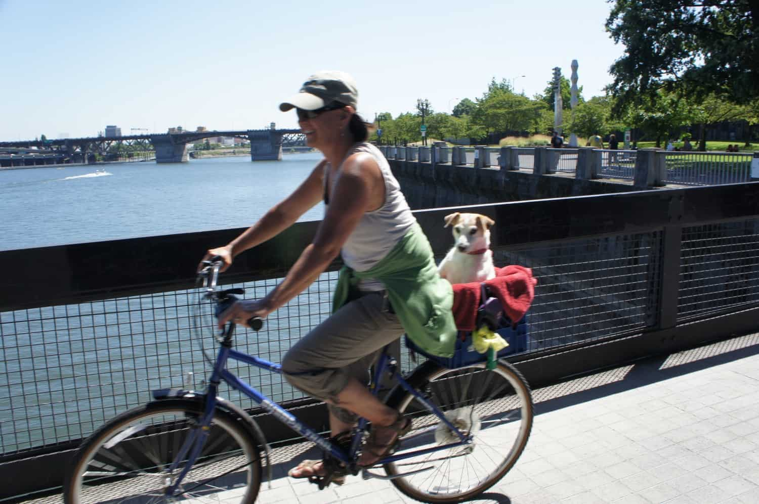 Dog on Bike - Portland, Oregon