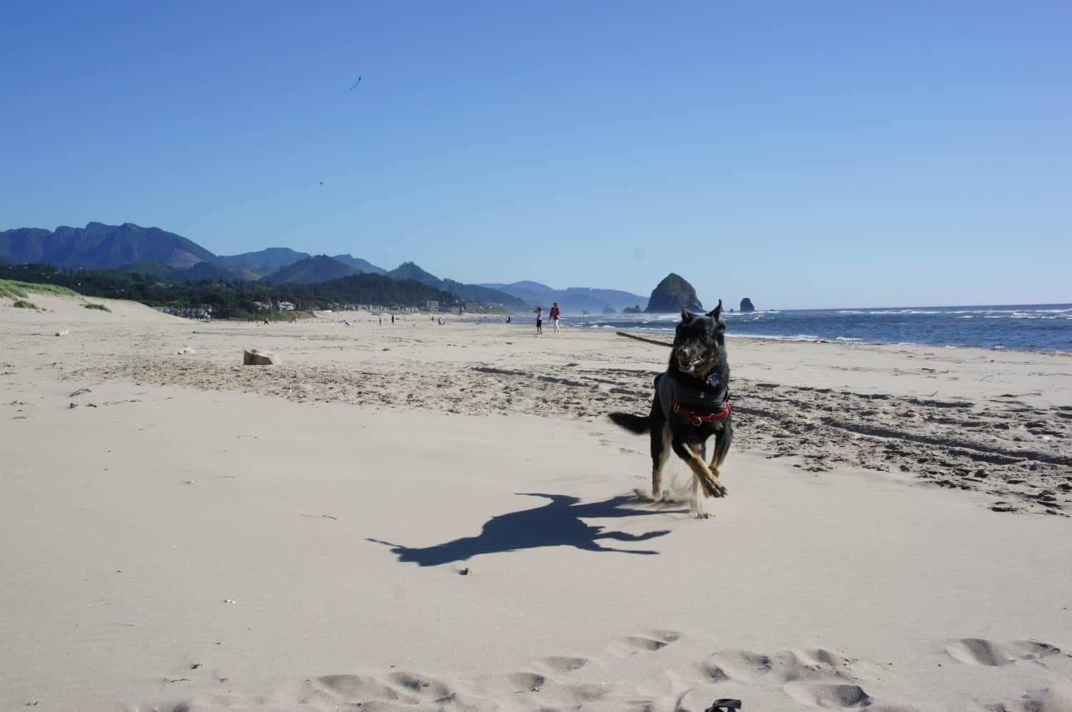 Buster on the Beach - Cannon Beach, Oregon