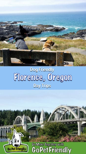 Two dogs on a bench near pet friendly Florence, Oregon