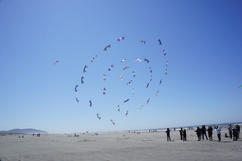 Kites in formation - Long Beach, WA