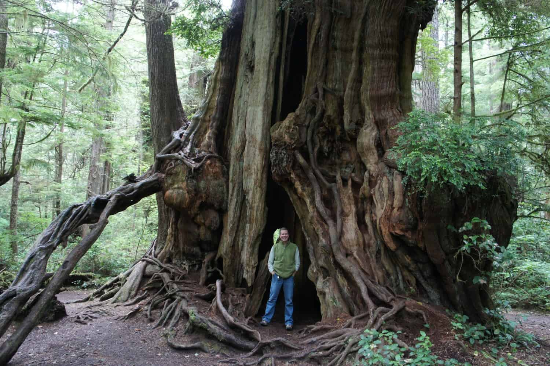 Big Cedar Tree - Olympic, WA