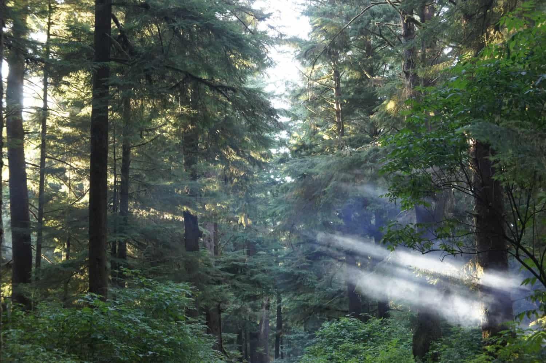 Hoh Rain Forest - Olympic, WA