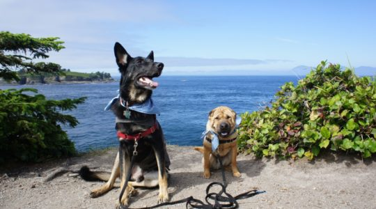 Buster and Ty at Cape Flattery, WA
