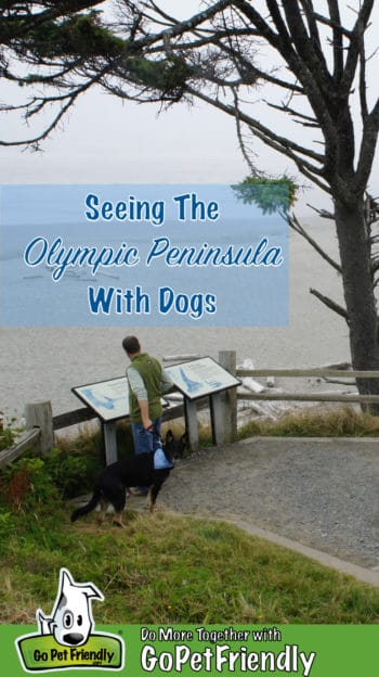 Man with dog reading a sign overlooking a dog friendly beach on the Olympic Peninsula, WA