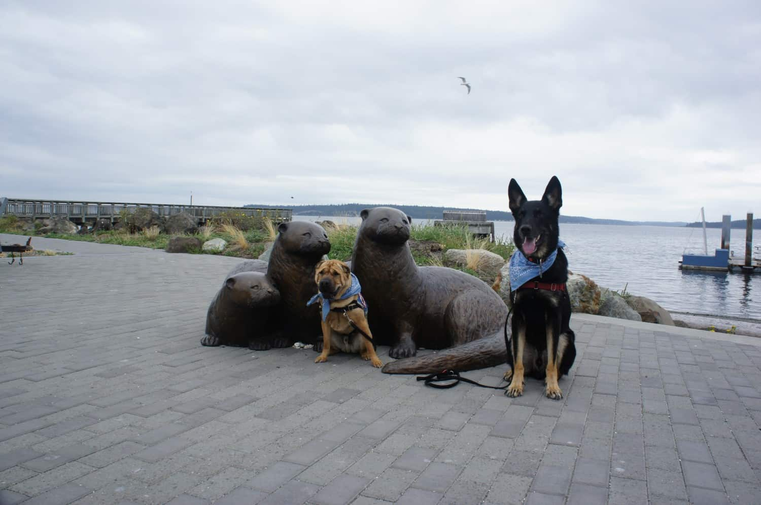 Otters and Dogs - Port Townsend, WA