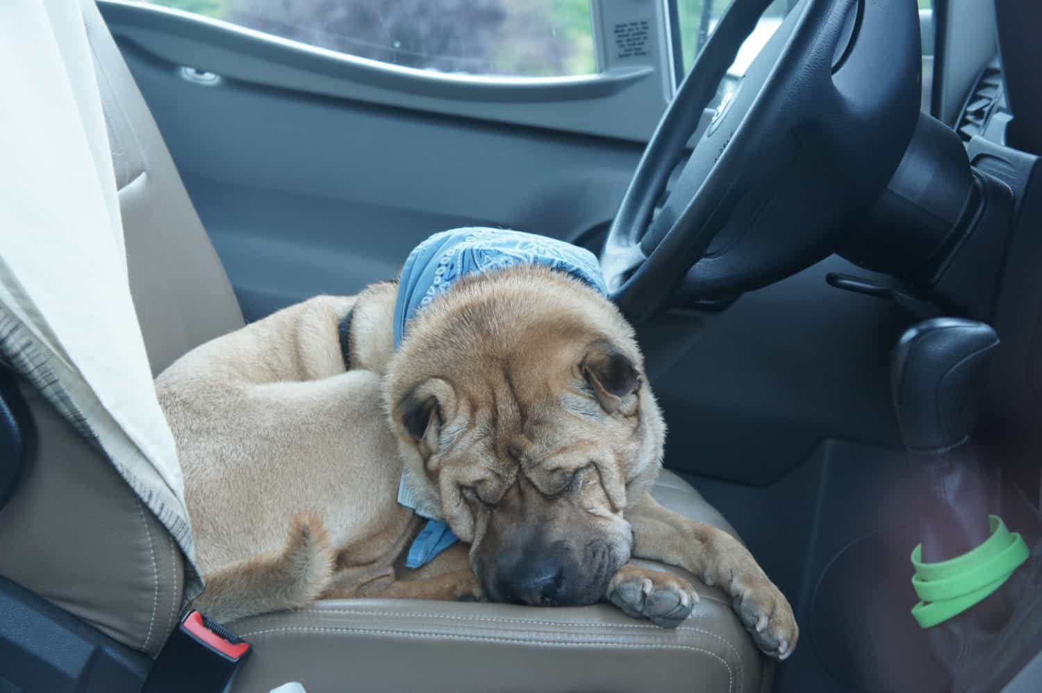 Ty Sleeping on Driver's Seat