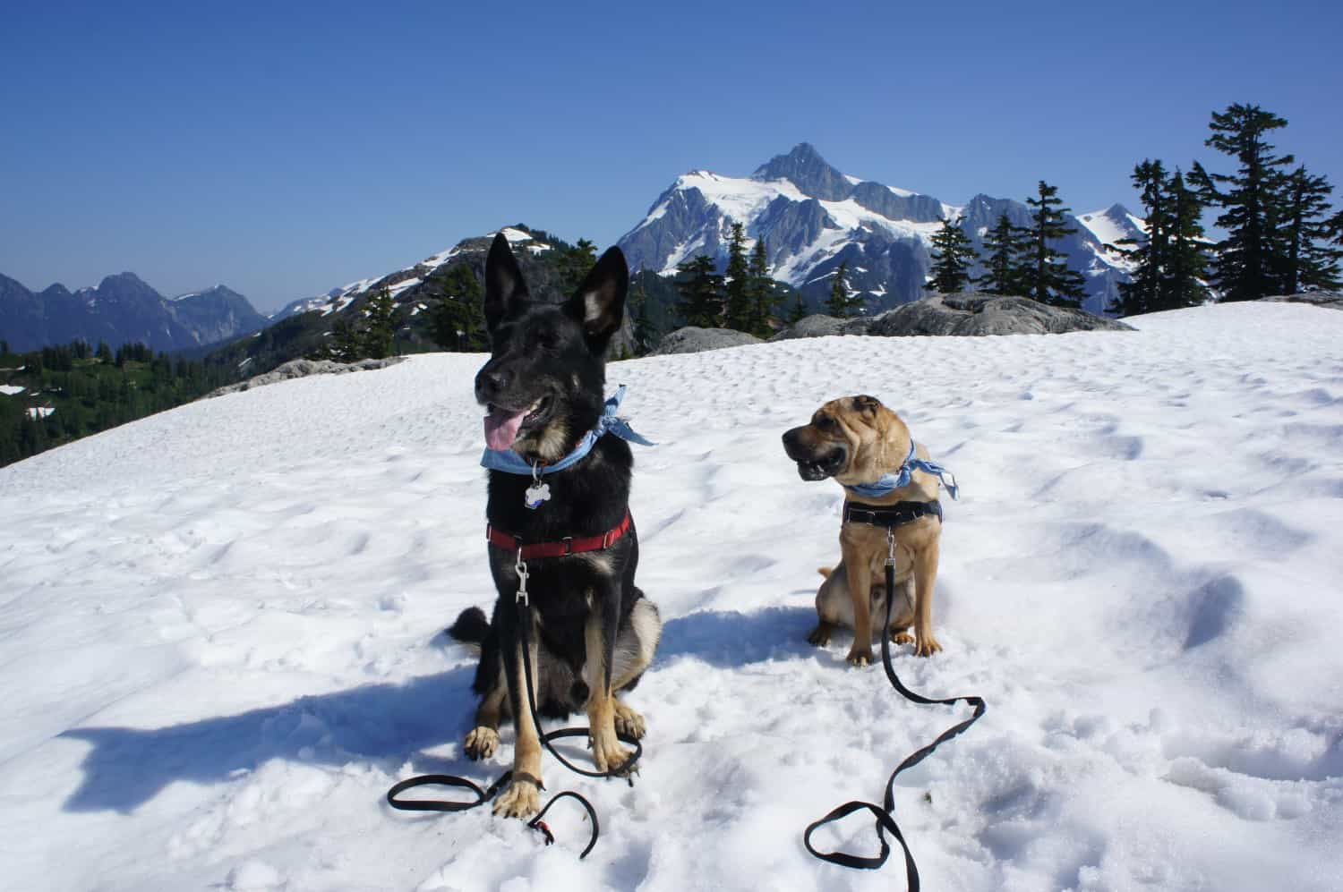 Dog Friendly Hiking at Mount Baker