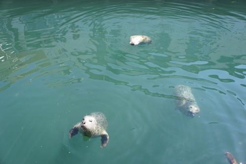 Feeding Seals on Fisherman's Warf - Victoria, BC