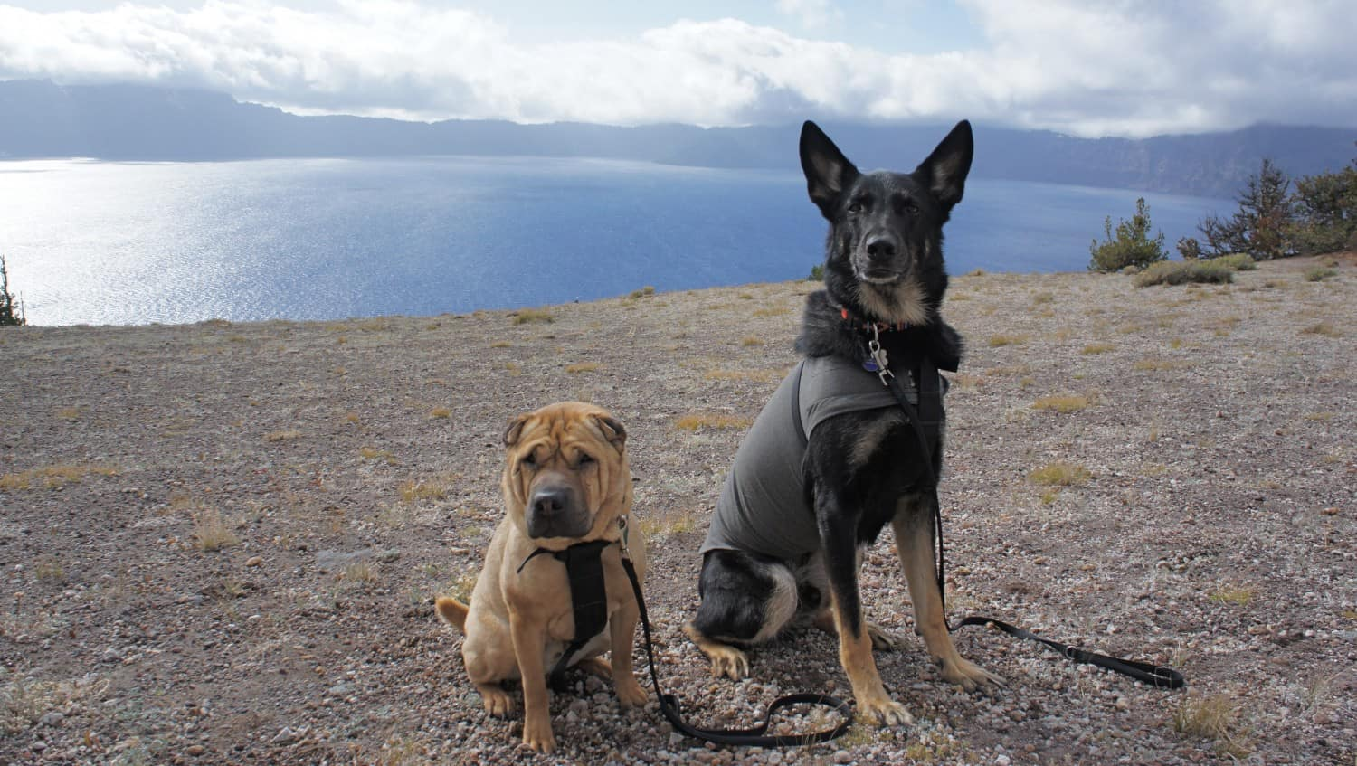 Visiting Crater Lake with Dogs - Stunning!