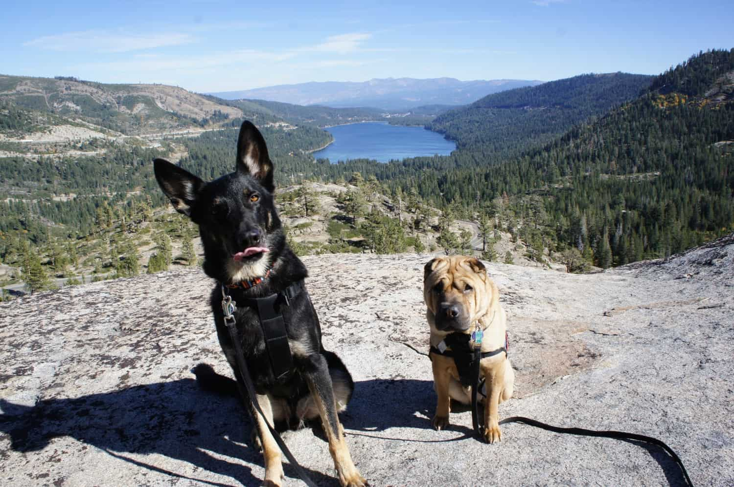 Pet Friendly Day Trips from Lake Tahoe