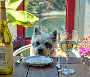 Dog Friendly Adventures in Mendocino