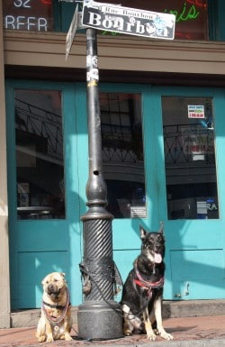 Ty and Buster on Bourbon Street - New Orleans, LA