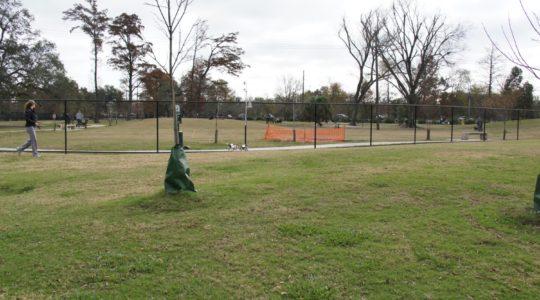 City Park Dog Park - New Orleans, LA