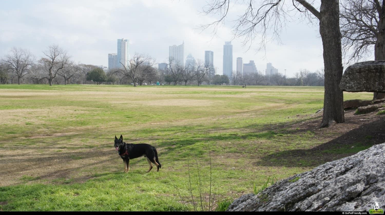 Buster at Zilker Park